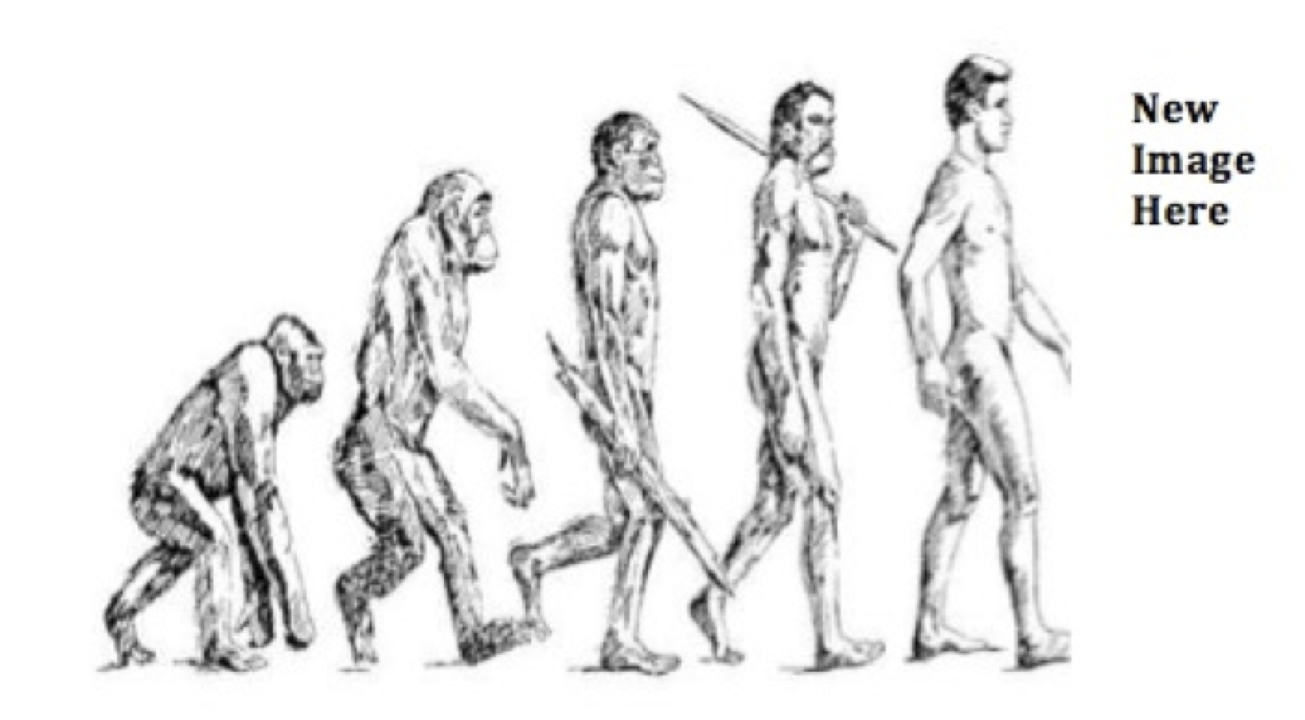 human evolutionary traits and behjaviours bipedalism 2 pelvic morphology in humans and non-human primates the overall form of the pelvis in hominins is dramatically different from other primates in many key ways that reveal human adaptations to bipedalism, thermoregulation and parturition (see [22,23] and summaries in the literature [7,9,24] for more details.